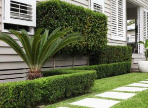 thecleverdesignstore co in addition Plants furthermore List 1 together with Low Maintenance Plants also Hedges Landscaping. on nz native garden design ideas
