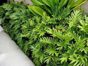 Top 10 Low Maintenance Plants Kyora Landscapes Blog