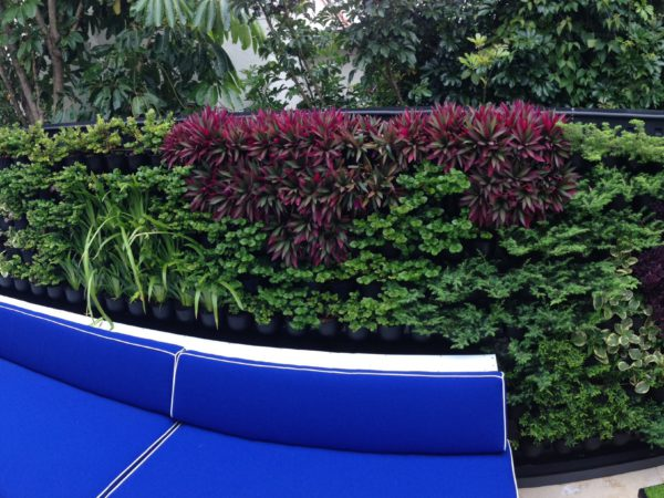 Rose Bay Greenwall 11
