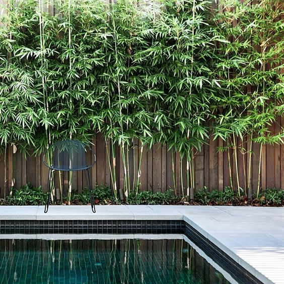 TOP BAMBOO TYPES BLOG KYORA LANDSCAPES